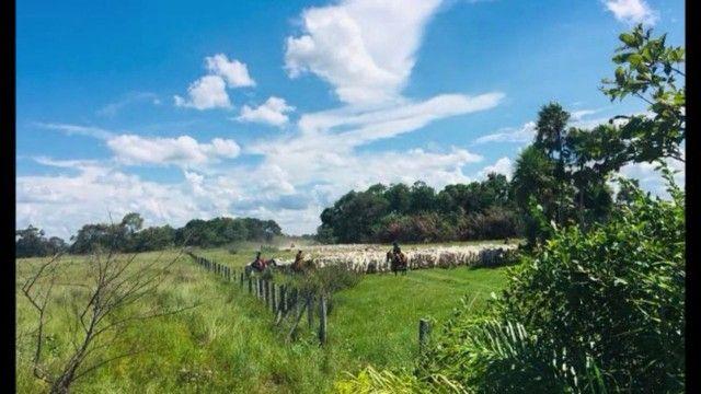 Fazenda em Pantanal Nhecolandia - Leilão Novo Horizonte - MS