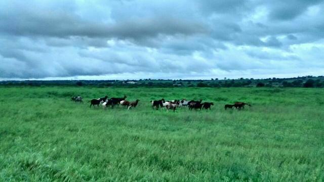 Fazenda em Ribeira do Pombal - Foto 7