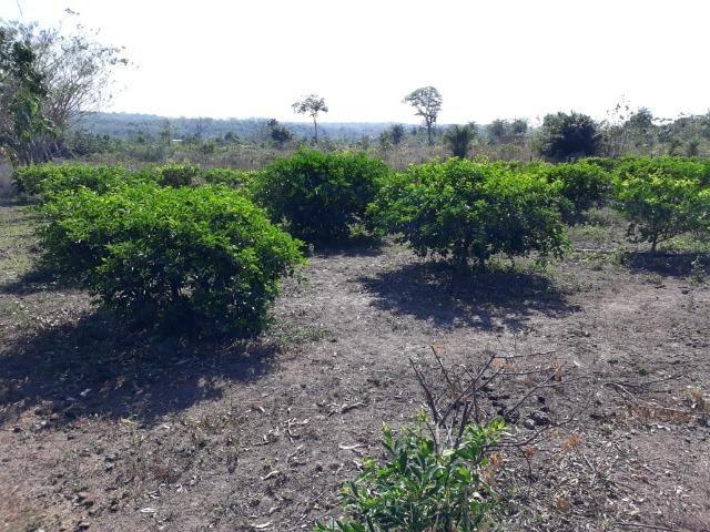 Chácara no Setor Agrícola, em Média, há 20km de Imperatriz - Foto 12