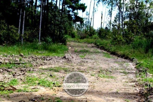 Seu sitio em Bom Retiro na Serra Catarinense - Foto 12