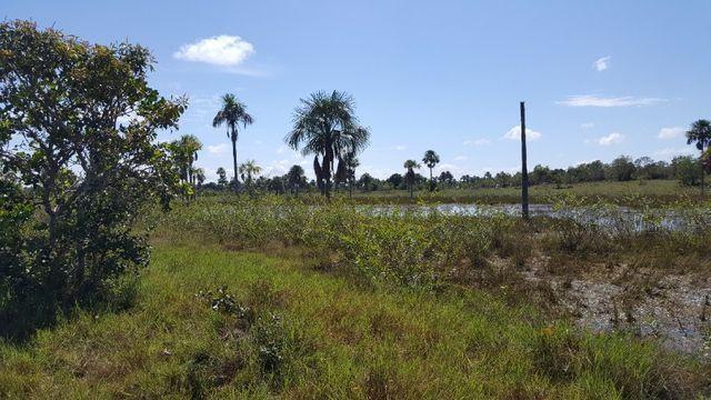 Fazenda de 1500 hectares em Alto Alegre/RR, ler descrição do anuncio - Foto 9