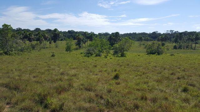 Fazenda de 1500 hectares em Alto Alegre/RR, ler descrição do anuncio - Foto 8