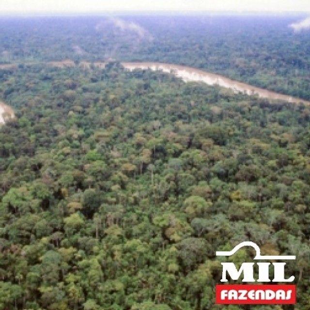 108.000 Há. Humaitá - Amazonas (Mata p/ Exploração)