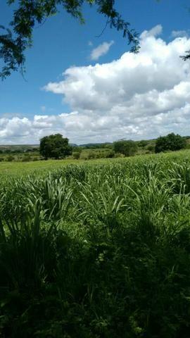 Fazenda em Ribeira do Pombal - Foto 4