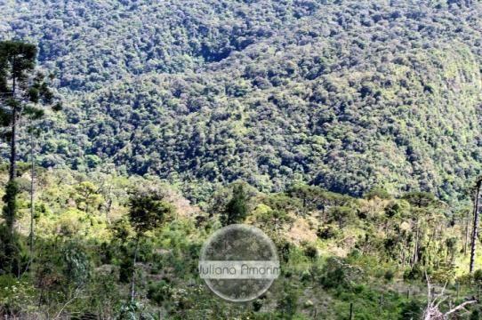 Seu sitio em Bom Retiro na Serra Catarinense - Foto 7