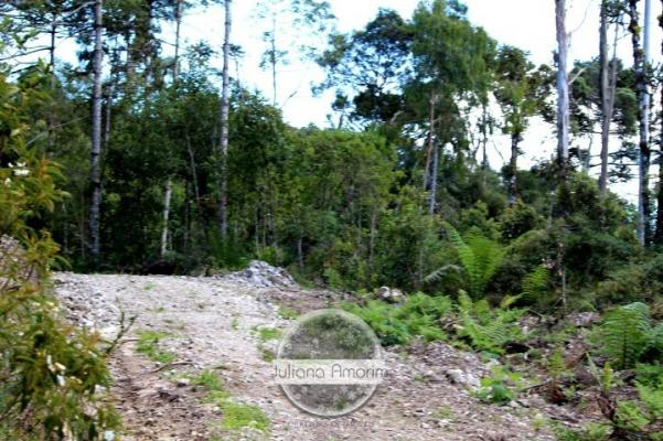 Seu sitio em Bom Retiro na Serra Catarinense - Foto 16