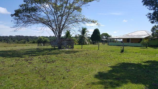Fazenda de 1500 hectares em Alto Alegre/RR, ler descrição do anuncio - Foto 10