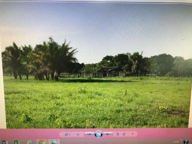 Fazenda na nhecolandia - Foto 4