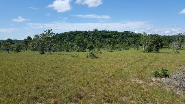 Fazenda de 1500 hectares em Alto Alegre/RR, ler descrição do anuncio - Foto 18
