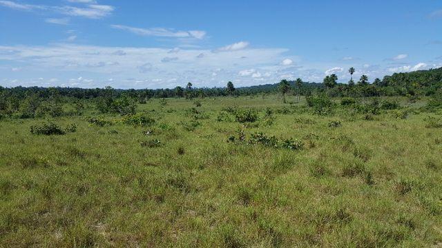Fazenda de 1500 hectares em Alto Alegre/RR, ler descrição do anuncio - Foto 20