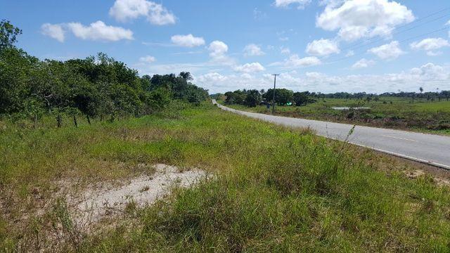 Fazenda de 1500 hectares em Alto Alegre/RR, ler descrição do anuncio - Foto 7