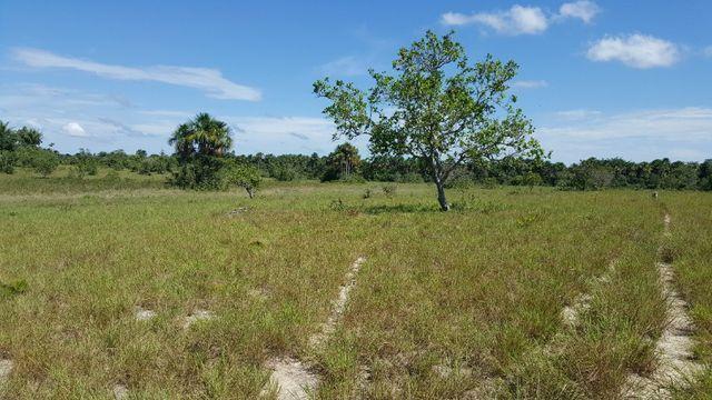 Fazenda de 1500 hectares em Alto Alegre/RR, ler descrição do anuncio - Foto 17