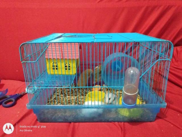 Vende-se gaiolas para hamster