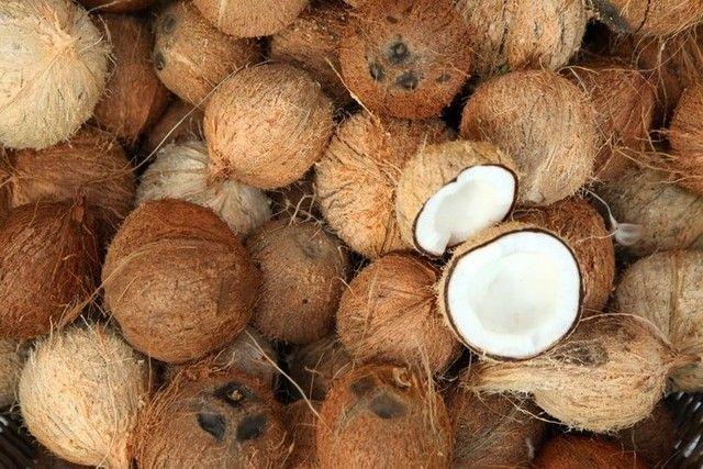 Vende-se cocos seco