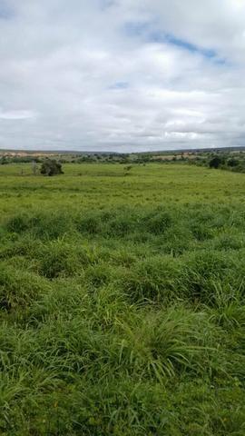 Fazenda em Ribeira do Pombal - Foto 11
