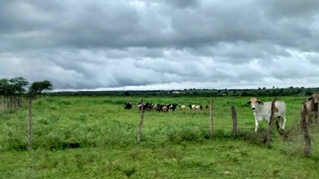 Fazenda em Ribeira do Pombal - Foto 5