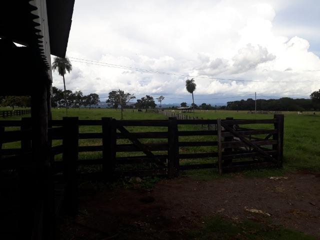 """Confinamento ou Laticínio na comunidade olho d""""agua na BR 364 a 30 km de Cuiabá - Foto 6"""