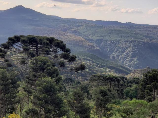Belíssimo Sítio na Rota Turística de Urupema/Rio Rufino - Foto 2