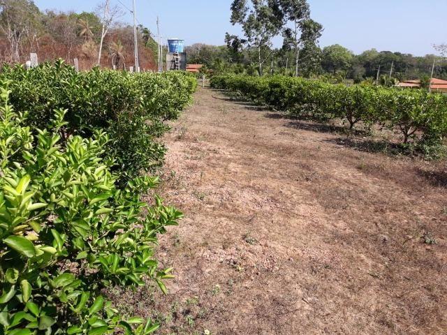 Chácara no Setor Agrícola, em Média, há 20km de Imperatriz - Foto 10