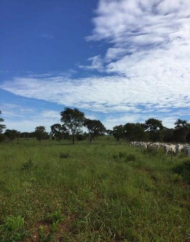 Fazenda na nhecolandia - Foto 2