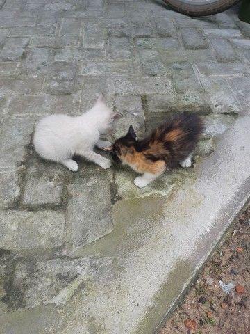 Doa se duas gatinhas fêmeas  - Foto 3