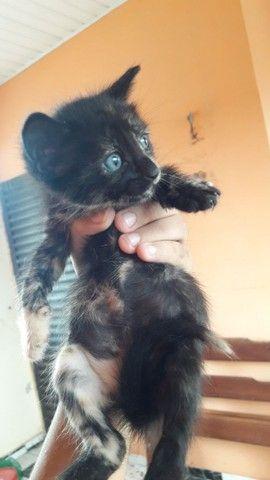 gatinha precisando de um lar - Foto 2