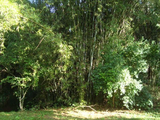 Vende-se varas de bambu taquara, cana da índia e imperial - Foto 2
