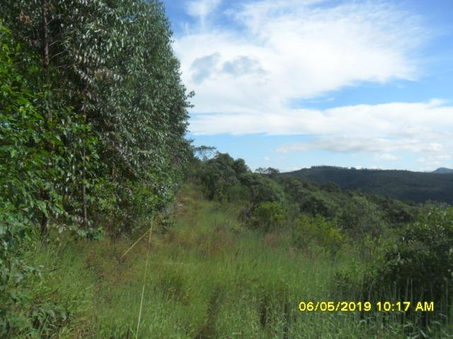 225B/ Maravilhosa fazenda de 235 ha com lindas cachoeiras em Ouro Preto a 76 km de BH - Foto 19