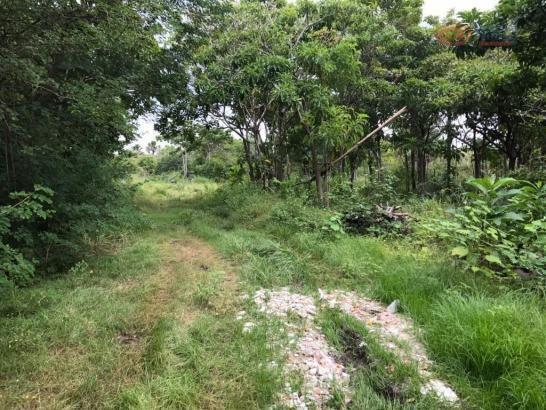 Terreno rural à venda, zona rural, barreirinhas - te0144. - Foto 2
