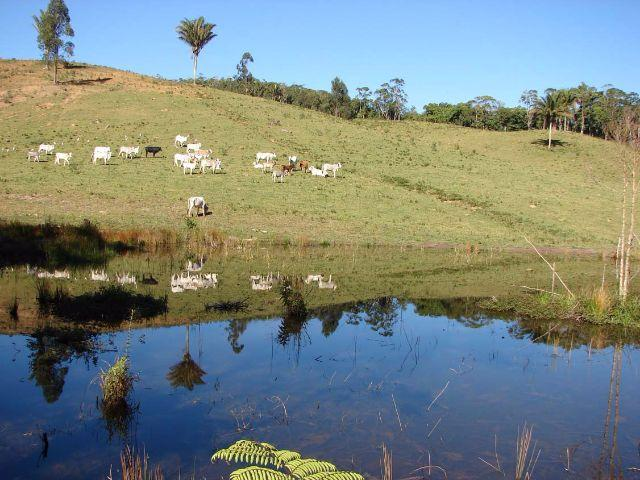 Sorocaba Região Fazenda 200 Alqueires - Foto 13
