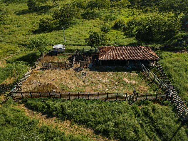 Magnífica fazenda 3.330 tarefas, a 23 km de jequié, br 116 na porta - Foto 13
