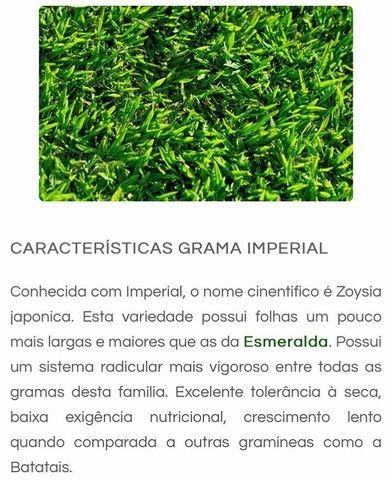 Grama Esmeralda Imperial - O melhor preço de Brasília. - Foto 2