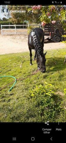 Vendo ou troco, cavalo manga larga marchador , marcha batida ,pego bezerros e etc. - Foto 4