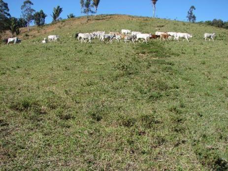Sorocaba Região Fazenda 200 Alqueires - Foto 14