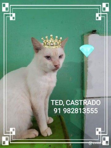 Gatos castrados disponíveis para adoção  - Foto 2
