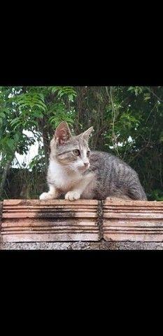 Gatos. Doa-se - Foto 4