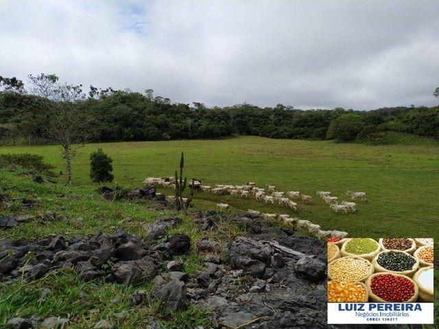 FAZENDA À VENDA EM RIO NEGRO - MS - DE 1.065 HECTARES (Pecuária) - Foto 7