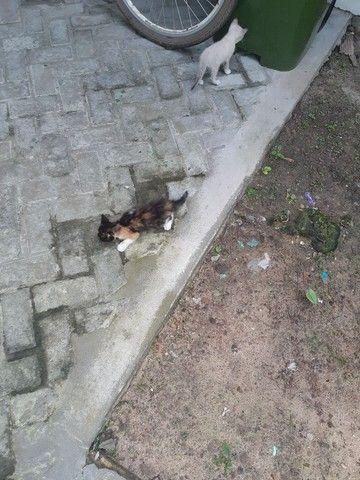 Doa se duas gatinhas fêmeas  - Foto 4