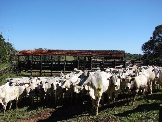 Sorocaba Região Fazenda 200 Alqueires - Foto 8
