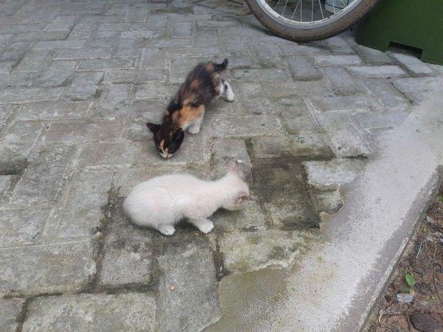Doa se duas gatinhas fêmeas  - Foto 2