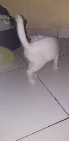 Estou doando esse gatinho.. - Foto 2