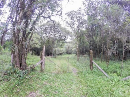 Chácara à venda em Picassinho, Piên cod:136674 - Foto 10