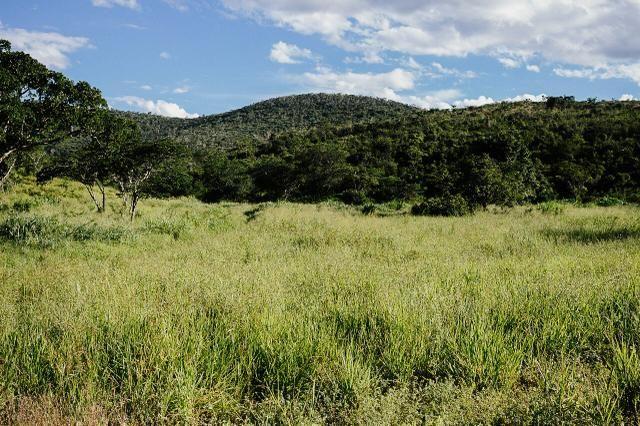 Magnífica fazenda 3.330 tarefas, a 23 km de jequié, br 116 na porta - Foto 9