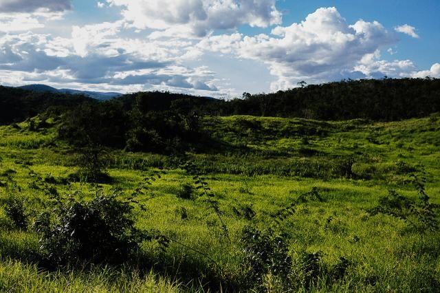 Magnífica fazenda 3.330 tarefas, a 23 km de jequié, br 116 na porta - Foto 6