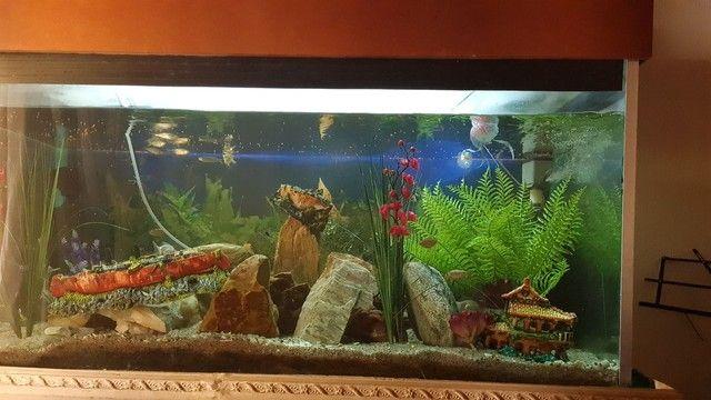 Aquario 830 litros - Foto 5