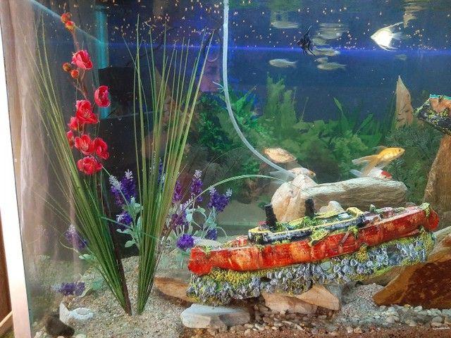 Aquario 830 litros - Foto 2