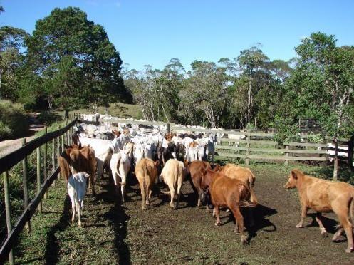 Sorocaba Região Fazenda 200 Alqueires - Foto 7