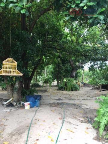 Chácara residencial à venda, panaquatira, são josé de ribamar. - Foto 12