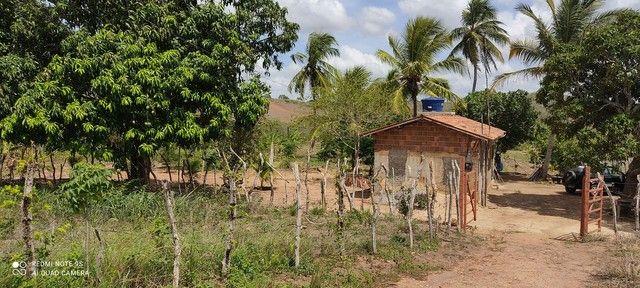 Vende ou troca sítio na cidade de Cuité de mamanguape.medindo60/60. - Foto 4