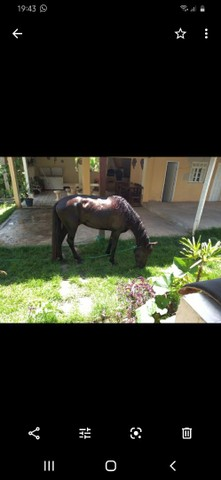 Vendo ou troco, cavalo manga larga marchador , marcha batida ,pego bezerros e etc. - Foto 3